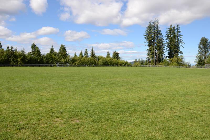 Aspenwood Grass